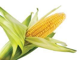 Ljekovitost kukuruza